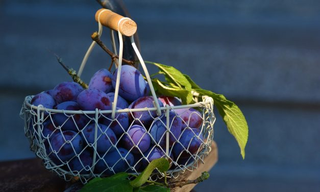 Alimentos venotónicos para aliviar las varices